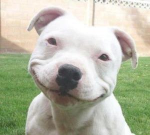 Sorria-a-vida-e-bela